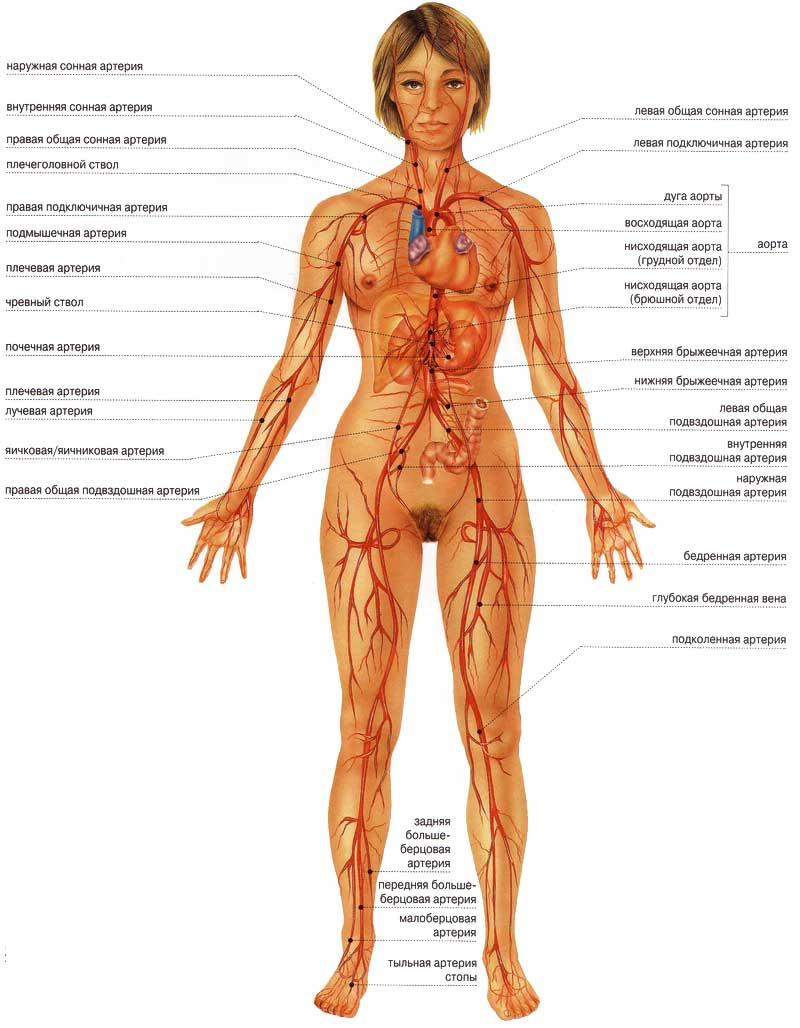 фото массаж для увеличения грудины